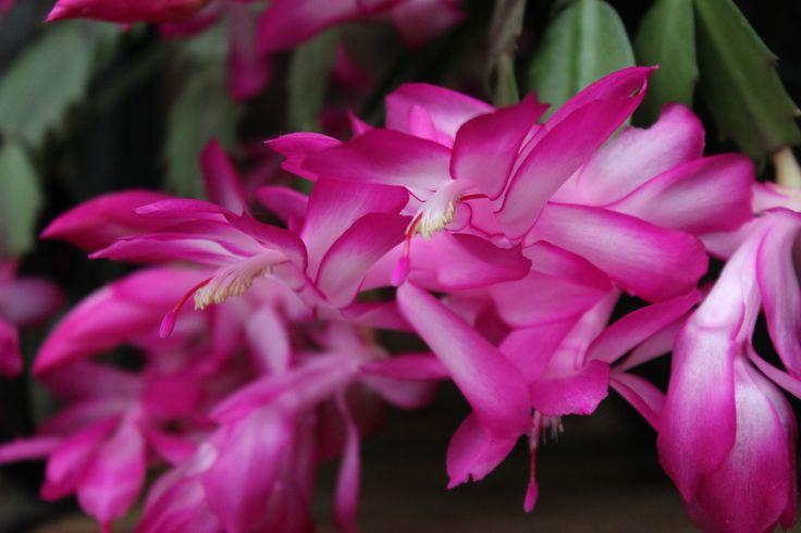 Tropical colour of the garden.