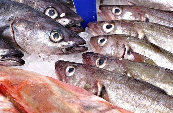 Následující seznam představuje stručný přehled nejběžnějších druhů ryb. Samozřejmě existuje ještě mnoho dalších druhů, které lze rovněž použít k uzení.