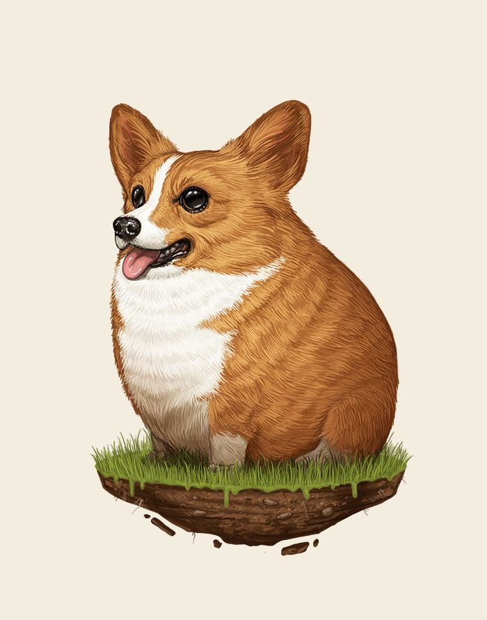 Corgi / Sir Mitchell