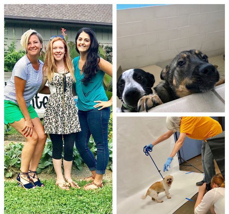 One of our passions is giving back! When you buy or sell with us, we'll make a donation on your behalf to a charity! One of the charities we work with, is the Young Williams Animal Center. We visited our friends at Young Williams last week and we are always so impressed by all that they do for the animals in our community! http://www.young-williams.org #givingback #youngwilliamsanimalcenter #dontshopadopt #pets #petsarefamily