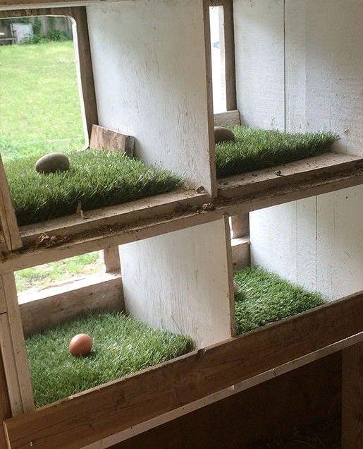 Enten Schnecken Fressen Garten: 18 Besten Hühner Futterautomat / Wassertränke Bilder Auf