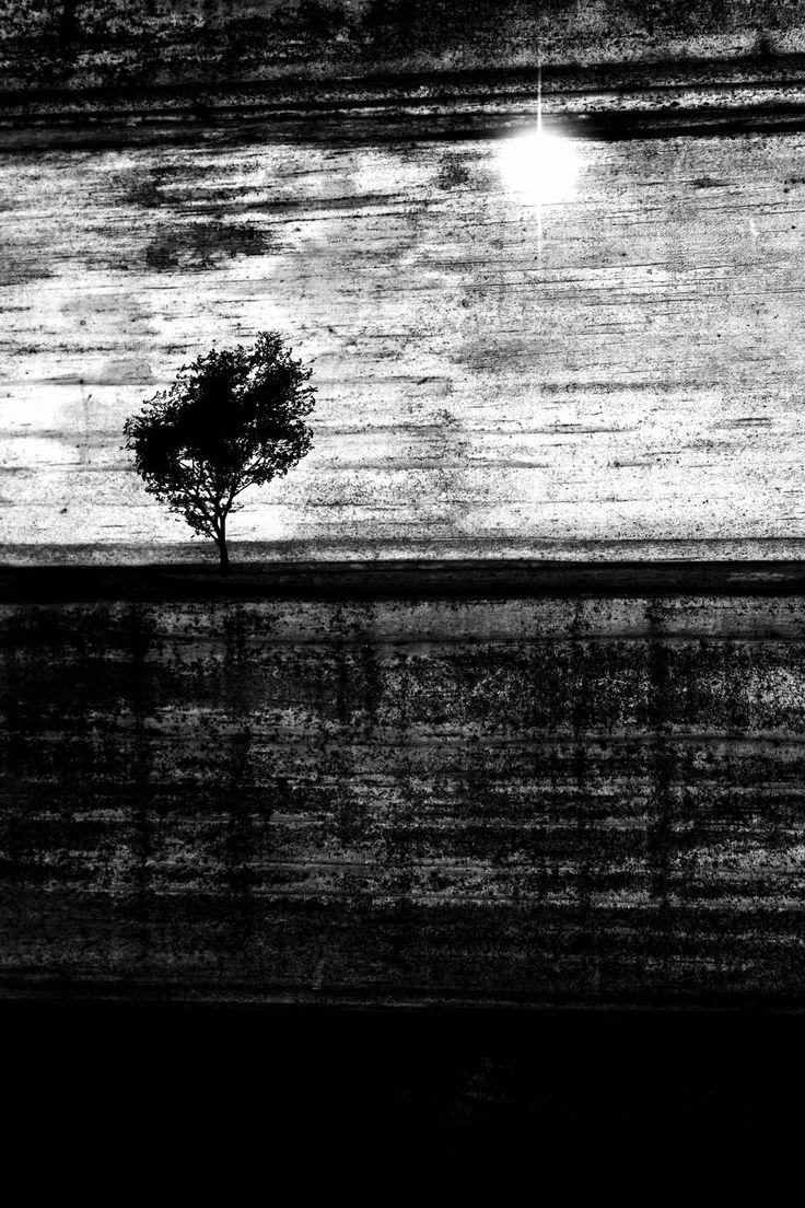 Tree of Knowledge variation by LillvA.deviantart.com on @deviantART