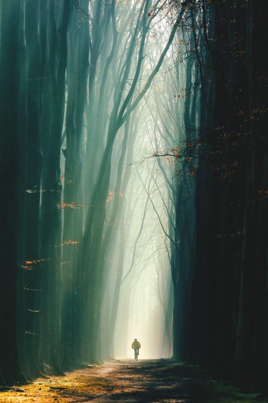 An incredible photo that almost looks like a painting or digital composite art. #photo #forest
