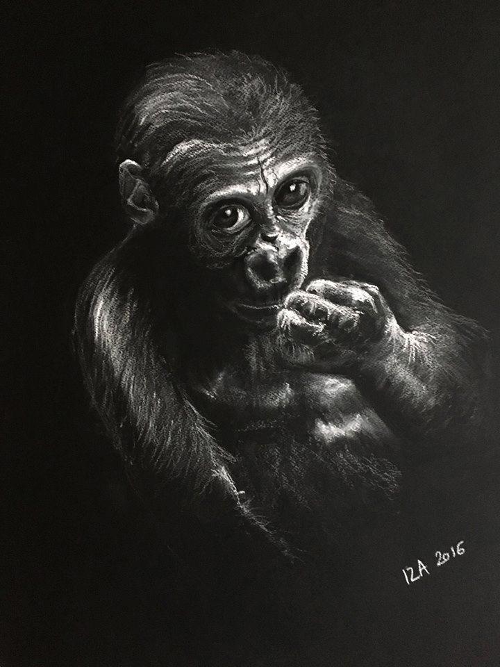 soft pastel, monkey,  portrait, white on black