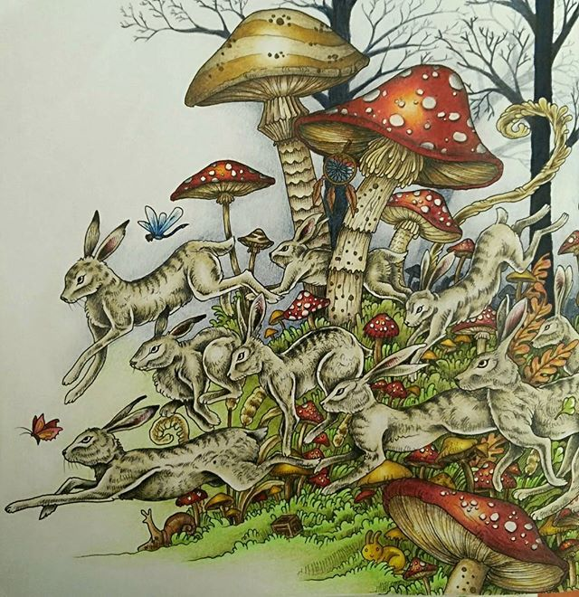 skeleton drawings doodle drawings adult coloring coloring books colouring colored pencils mushrooms book art 81