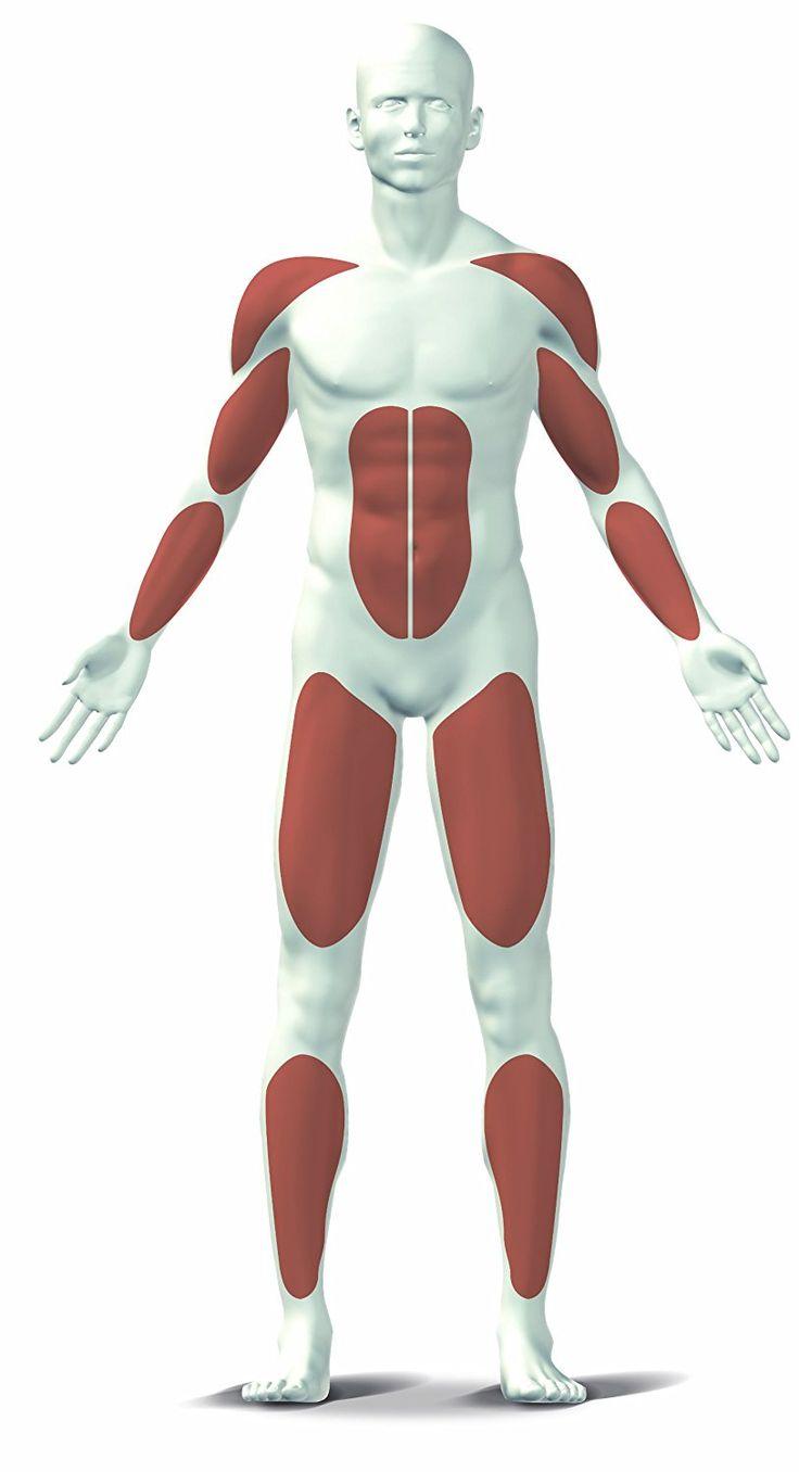 Training mit dem Rudergerät: Technik, Ausdauer, Abnehmen und Muskelaufbau | FITNESSMOJO | Fitness, Gesundheit & Ernährung
