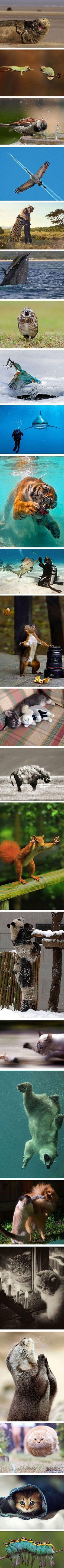 24 More Perfectly Timed Animal Photos - TechEBlog