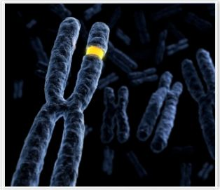 BCM Researchers Reveal Copy Number Variation Could Affect Severity of Genetic Diseases