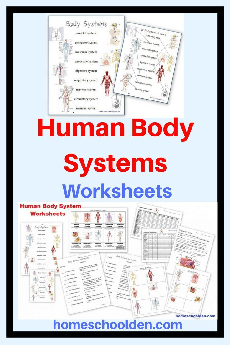 Human Body Systems Worksheets Body Systems Worksheets Human Body Systems Human Body Worksheets Human body system worksheets