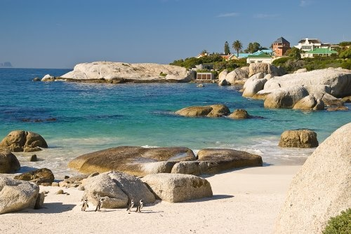 One day I want to hang out with these penguins on Boulders Beach in Cape Town, South Africa