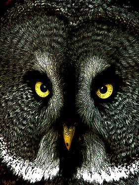 "Saatchi Online Artist TOULA MAVRIDOU-MESSER; Photography, ""Great Grey Owl"" #art #photography"