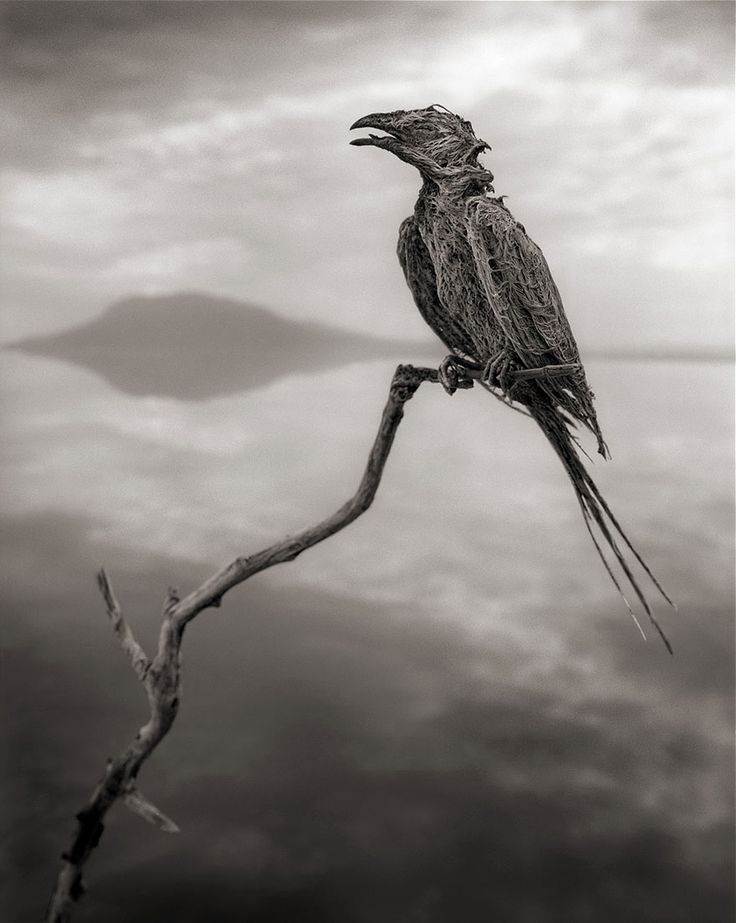 Deadly African Lake Turns Birds Into Salt Statues
