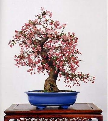 bonsai tree..