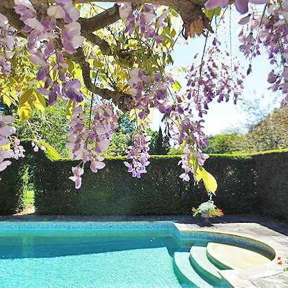 Swimming pool and cherry blossom. Picture courtesy of Old Whyly, East Sussex. #swimmingpool #cherryblossom