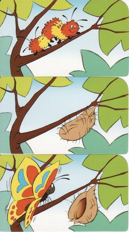 logische volgorde vlinder, free printable