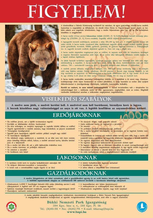 Brumm-brumm – így érdemes viselkedni, ha egy medve akad az utunkba | EgerHírek