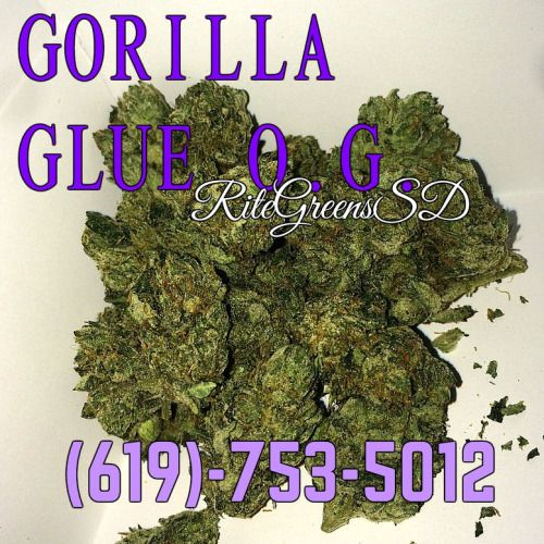 GORILLA GLUE O.G. >> ANY OTHER INDICA ON THE MENU! this heavy O.G. will have you feeling eternally silly and make any body pains un-noticable completely. Call now for a 5G 1/8th of this strain and much more! (619)-753-5012 #patientsonly #notforsale #prop215 #donate #gorillaglueog #sticky #frosty #619 #760 #858 #sandiego #deliveryonly #bomb #callnow #wfayo #WWS #indica #topshelflife #fueledbyTHC