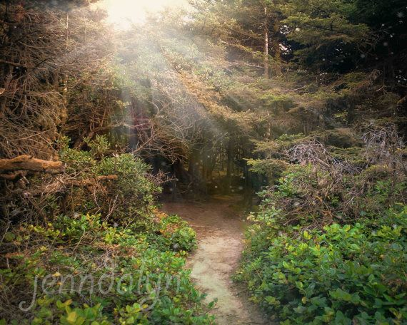 Walk With Me  PHOTO enchanted forest Oregon forest by Jenndalyn, $24.00