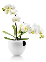maybe now i'll be able to keep an orchid alive...
