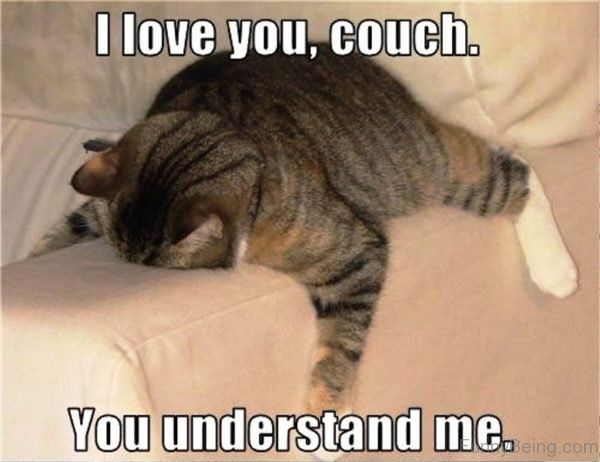 100 Funniest Love Memes Pictures To Express Your Love Funny Cat Memes Cat Memes Funny Animals