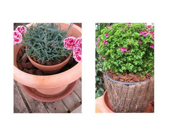 20 best images about plantas en casa on pinterest - Plantas que aguantan temperaturas extremas ...