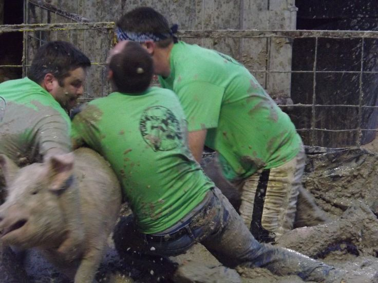 https://www.change.org/p/entertainment-marcia-harris-utah-county-fair-utah-county-fair-stop-pig-wrestling-at-the-utah-county-fair?recruiter=5137251&utm_source=share_petition&utm_medium=copylink