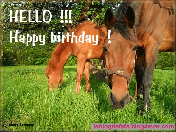123 best horse birthday quotes images on pinterest happy very polite and funny horse bookmarktalkfo Gallery