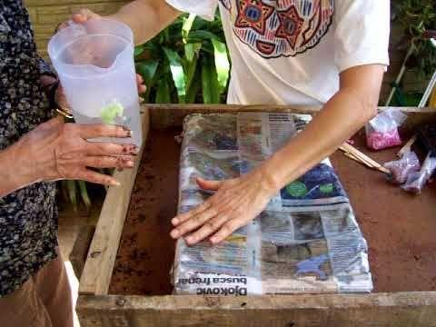 Hidroponia y cultivo orgánico #hidroponic #hidroponia y cultivo orgánico #hidroponico
