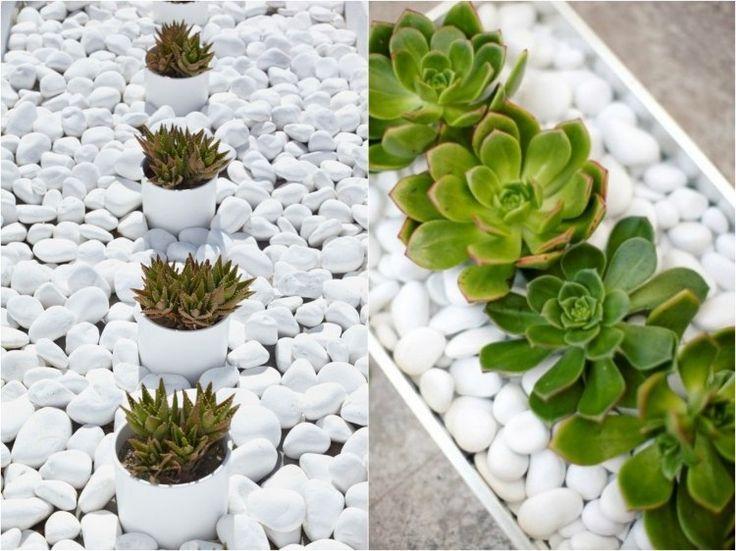 galet décoratif blanc et plantes succulentes pour le jardin