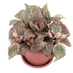 127 best images about plant care on pinterest air plants for How to take care of exotic angel plants