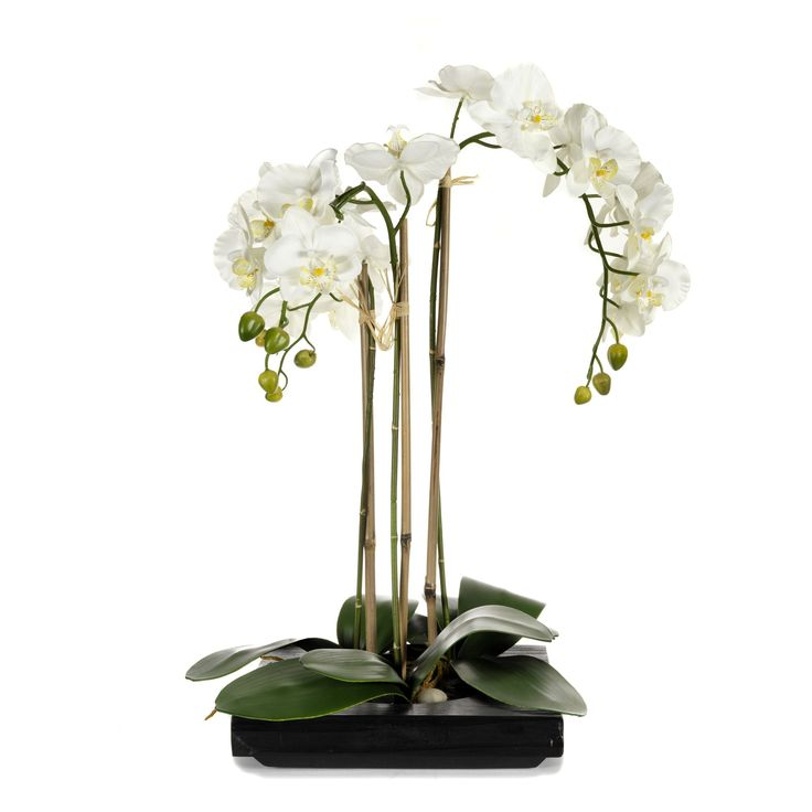 Orchid e artificielle sur plateau blanc orchid e plateau for Table jardin beauty