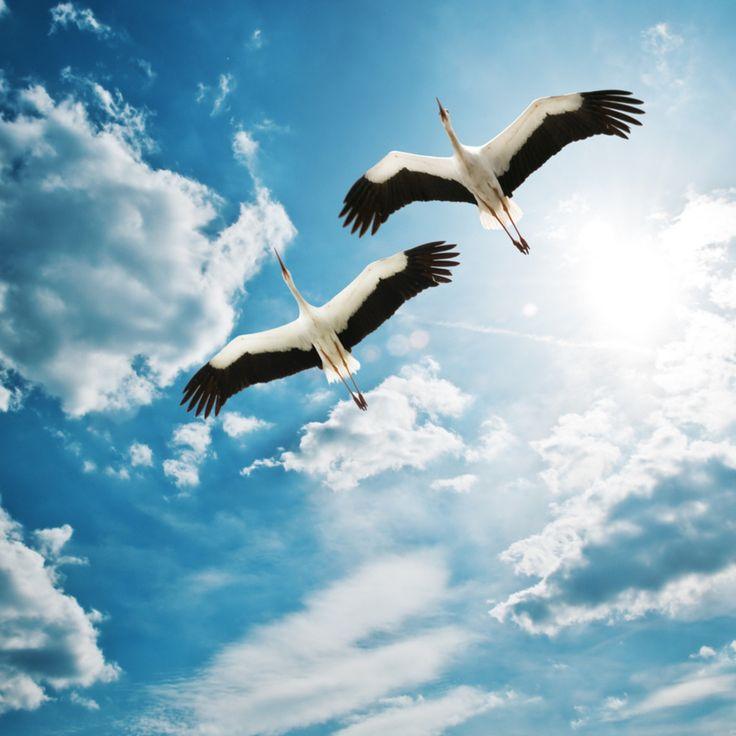 Guindastes 2048x2048 Papel de Parede, pássaros, voando, céu