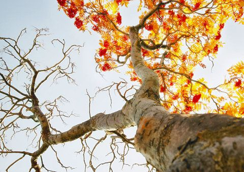 can imagine laying under it..:): Forests, Angles, Trees Rings, Badges, Fall Leaves, Autumn Leaves, Seasons, Dennings, Fall Trees