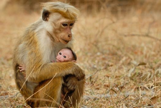 "Disneynature's ""Monkey Kingdom"" Movie Trailer"