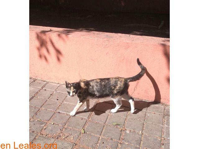 Gatos encontrados  España  Las Palmas - Gran Canaria  Telde March 08 2018 at 12:46AM   Gatita encontrada  #PERDIDO #ENCONTRADO  Contacto y Info: https://leales.org/perdidos-o-encontrados/gatos-encontrados_1/gatita-encontrada_i3641 #Difunde en #LealesOrg un #adopta y sé #acogida para #AdoptaNoCompres O un #SeBusca de #perro o #gatos ℹ Gatita encontrada en zona de Telde. Embarazada no sabemos de cuanto tiempo. Una chica se encarga de darle de comer todos los días.Siempre la espera a la misma…
