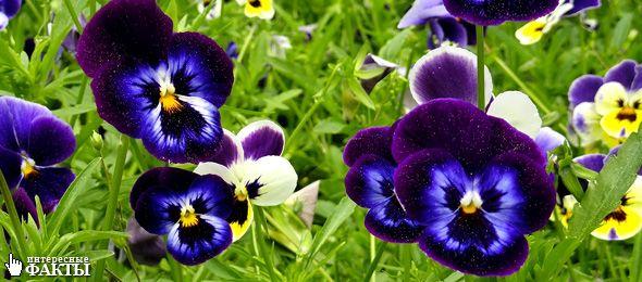 Удивительные факты о растениях