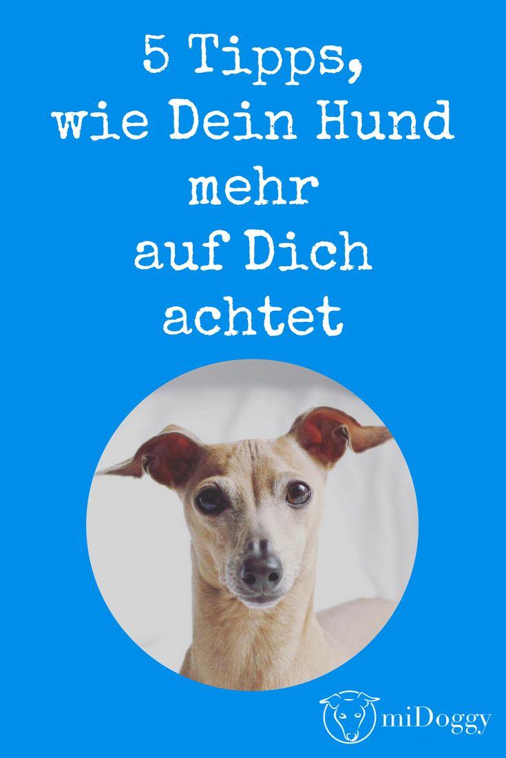Aufmerksamkeit vom Hund | Tipps und Tricks