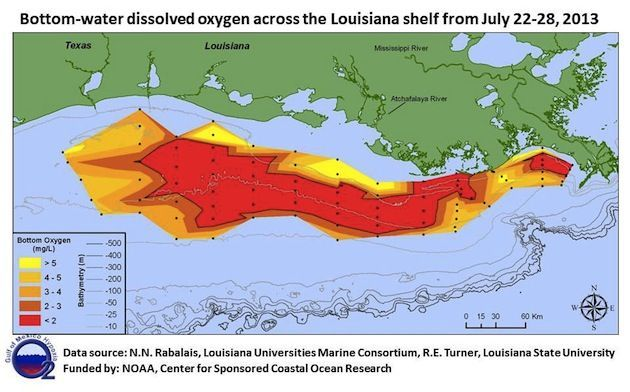 Why This Year's Gulf Dead Zone Is Twice As Big As Last Year's