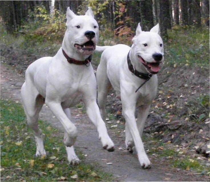 Guard Dog Kennels