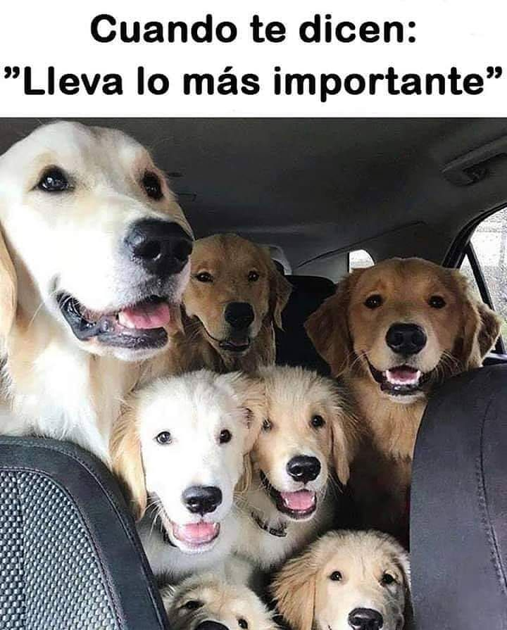 1 044 Me Gusta 5 Comentarios El Club De Los Poetas Muertos Clubdelos Poetasmuertos En Instagram Siguenos P Memes Perros Perros Graciosos Perros Frases