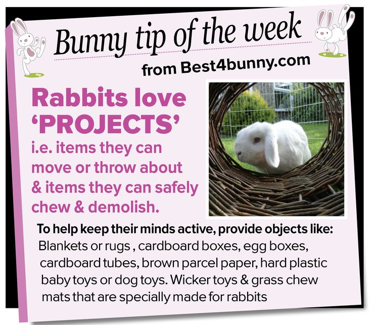 Bunny tip - Keep them busy with a 'Project' www.best4bunny.com