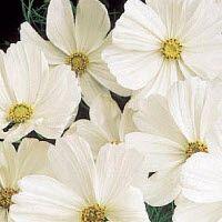 """Zoekresultaat """"5370"""" - zaden bestellen online bij Het Vlaams Zaadhuis - online bloemenzaden, groentenzaden, kruidenzaden, planten kopen"""