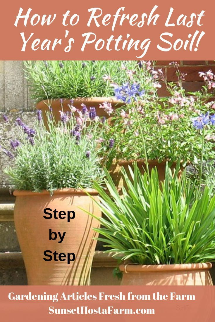 Refresh Your Potting Soil And Save Money With Images Garden