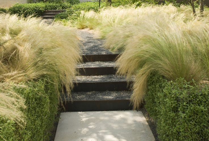 137 best images about ornamental grasses siergrassen on for Ten eyck landscape architects