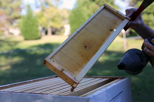 Great tips for winterizing your hive: http://blog.hgtvgardens.com/bee-season-winterizing-a-hive/