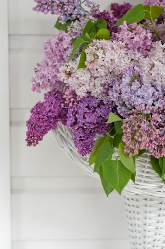 Lilacs!  Favorite!!.....love them....reminds me of my Mom.....just read an article about new small variety that keep on blooming