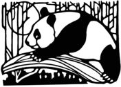 Panda In Bamboo Forest Coloring page