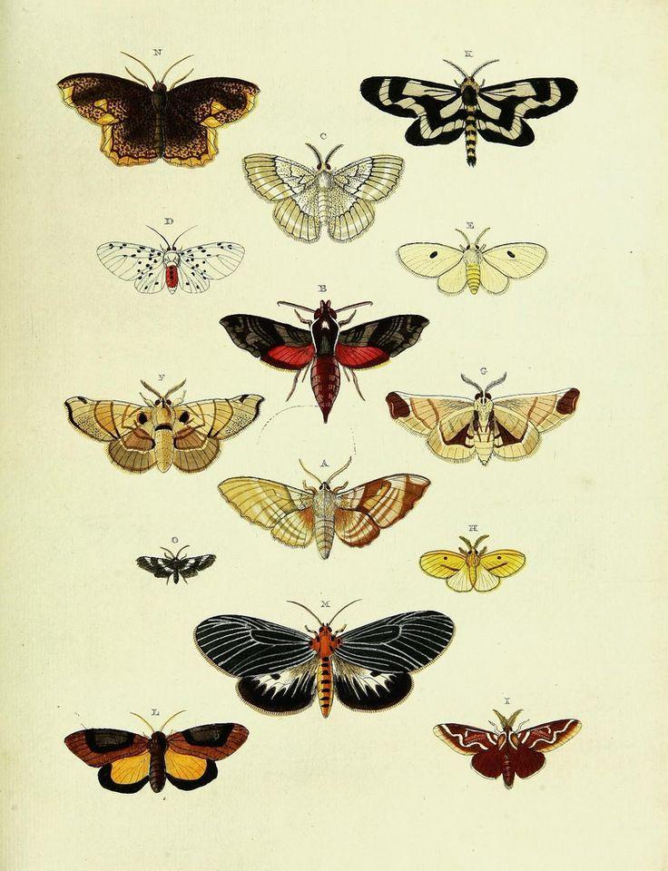 De uitlandsche kapellen voorkomende in de drie waereld-deelen, Asia, Africa en America,. Amsteldam,Chez S. J. Baalde;1779-1782.. biodiversitylibrary.org/page/42111265