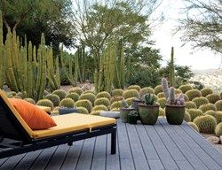 southern california los angeles cactus garden in a house designed richard neutra the home of lari pittman roy dowell cacti succulents
