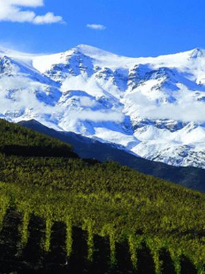 Join Us For a Taste of Chile- Virtually Tasting Chile's Finest. Are you ready for Chilean wine? Well I sure am, particularly after the lineup of wines I enjoyed in conjunction with our last Wines of Chile Virtual Tasting.... http://www.snooth.com/articles/chilean-wine-virtual-tasting/